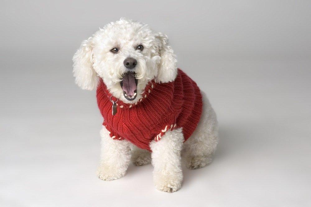 собачка в вязаном свитере